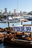 Sea lions at Pier 39, San Francisco, USA Stock Photos