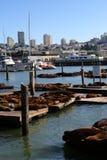 Sea lions at Pier 39, San Francisco, USA Stock Image