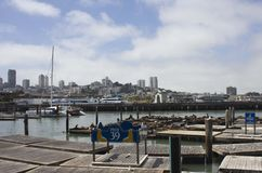 Sea Lions on Pier 39 Stock Images