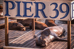 Sea lions at Pier 39, San Francisco, USA. Sea lions and pier 39 sign Royalty Free Stock Photos