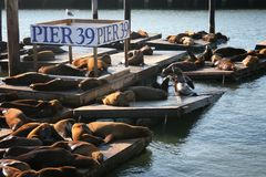 Sea Lions at Pier 39, San Franscisco Royalty Free Stock Image
