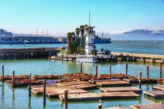 Sea lions at Pier. 39 a popular tourist attraction, it is located at the edge of Fishermans Wharf district and is close to North Beach and Embarcadero royalty free stock images