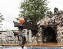 Sea Lions play. Show sea lion in zoo, animals and nature Stock Photography