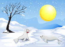 Sea lions playing with the snow under the fullmoon. Illustration of the sea lions playing with the snow under the fullmoon Royalty Free Illustration