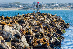 Sea Lions at Rest Stock Photos