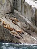 Sea lions on rock Royalty Free Stock Photography