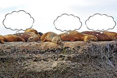 Sea Lions on the rock cartoon. With thought bubbles stock illustration