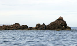 Sea lions rock Royalty Free Stock Images