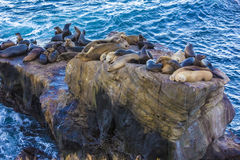 Sea lions on rock in La Jolla Cove, San Diego CA US Royalty Free Stock Photos