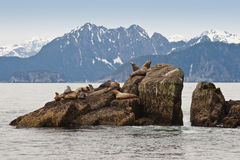 Sea lions on rocks Stock Photo