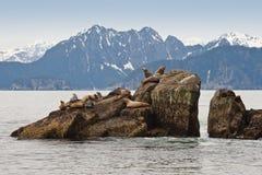 Sea lions on rocks Stock Photo