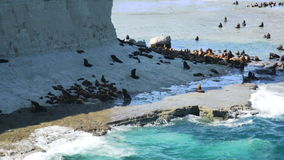 Sea lions rookeries at ocean coast of Valdes Peninsula in Argentina stock video