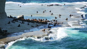 Sea lions rookeries at ocean coast of Valdes Peninsula in Argentina stock footage
