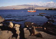 Sea Lions and sailboat Royalty Free Stock Photo
