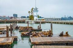 Sea lions San Francisco Stock Photos