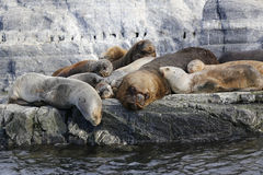 Sea Lions at the Sea Lions island in Beagle Channel,  Argentina Stock Image
