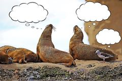 Sea Lions and seagull on the rock cartoon. With thought bubbles stock illustration