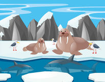 Sea lions and shark in the north pole. Illustration Royalty Free Stock Image