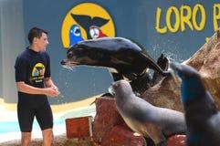 Sea lions show in Loro Park in Puerto de la Cruz on Tenerife, Canary Islands Royalty Free Stock Images