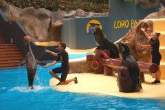 Sea lions show in Loro Park in Puerto de la Cruz on Tenerife, Canary Islands Stock Photos