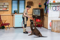 Sea lions show in the zoo of Antwerp, Belgium Stock Image