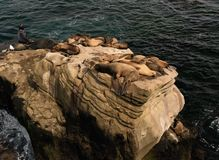 Sea Lions sleeping on rocks. Sea Lions nap of rocky cove at La Jolla Beach in San Diego royalty free stock photography
