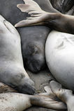Sea lions sleeping in the sun. A group of sea lions sleeping in the sun on the California coast Stock Photo