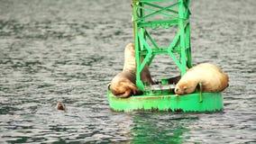 Sea Lions Slumber Ocean Buoy Reserrection Bay Sea Wildlife stock footage