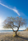 The sea, a lonely tree on the beach at sunrise .Evropa, the Balkans, Greece, Attica, Athens. Stock Photo