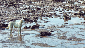 Sea At Low Tide Royalty Free Stock Photo