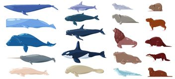 Sea mammal vector water animal character dolphin walrus and whale in sealife or ocean illustration marine set of sea. Lion or sea-cow and seal or otter vector illustration