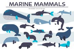 Sea mammals animal collection icons set. Vector fish illustration in ocean life background. Marine exotic creature flat vector illustration