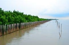 Sea, mangroves , Samut Prakan in Thailand Royalty Free Stock Image