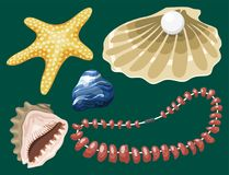 Sea marine animals and shells souvenirs cartoon. Sea marine animals and shells souvenirs cartoon vector illustration. Spiral tropical mollusk mussel decoration Stock Photo