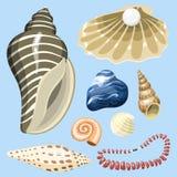 Sea marine animals and shells souvenirs cartoon vector illustration spiral tropical mollusk mussel decoration. Sea marine animals and shells souvenirs cartoon Stock Photo