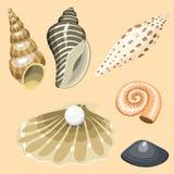 Sea marine animals and shells souvenirs cartoon vector illustration spiral tropical mollusk mussel decoration. Sea marine animals and shells souvenirs cartoon Stock Images