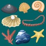 Sea marine animals and shells souvenirs cartoon vector illustration spiral tropical mollusk mussel decoration. Sea marine animals and shells souvenirs cartoon Royalty Free Stock Image