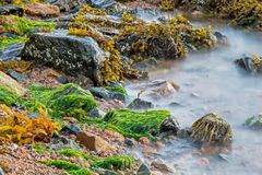 Sea Meets Land On Cape Breton In Nova Scotia, Canada. Thirsty seaweed awaits the coming of high tide at the shore of Great Bras D`Or on the island of Cape Breton stock photo