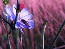 Sea mi abeja Fotos de archivo libres de regalías