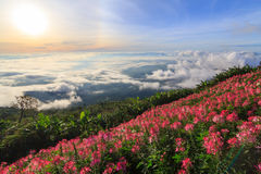 Sea of mist on high mountain Royalty Free Stock Photography
