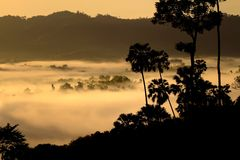 The Sea of Mist at Khao Kho. Shoot at the top of the mountian Royalty Free Stock Photos