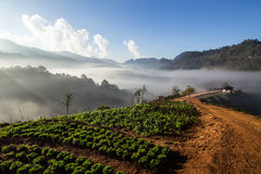 Sea of mist in the morning Royalty Free Stock Photo