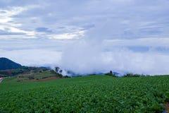 Sea mist. Stock Images