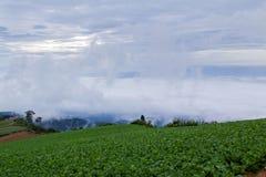 Sea mist. Stock Photography