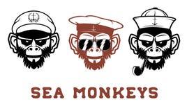 Sea monkey Royalty Free Stock Photos