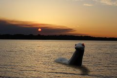 Red Eyed Sea Monster at Sunset stock image