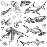 Sea monsters Royalty Free Stock Photography