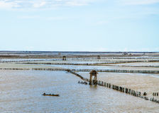 Sea Mussel farms Stock Photography