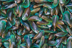 Sea mussels Stock Photos