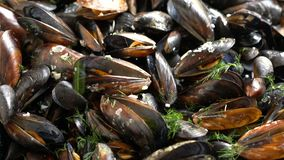 Top view cooked sea mussels rotating background stock video